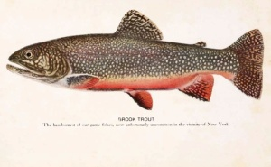 Brook_trout_1918
